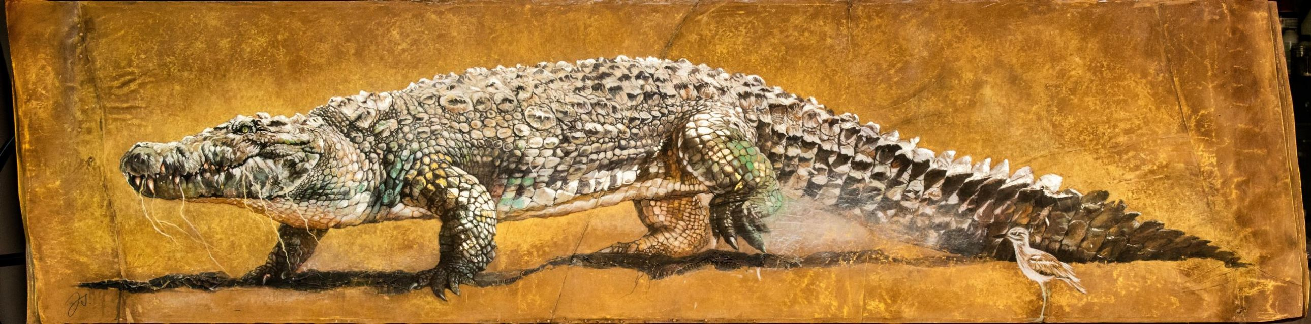 oedicneme et le crocodile.jpg