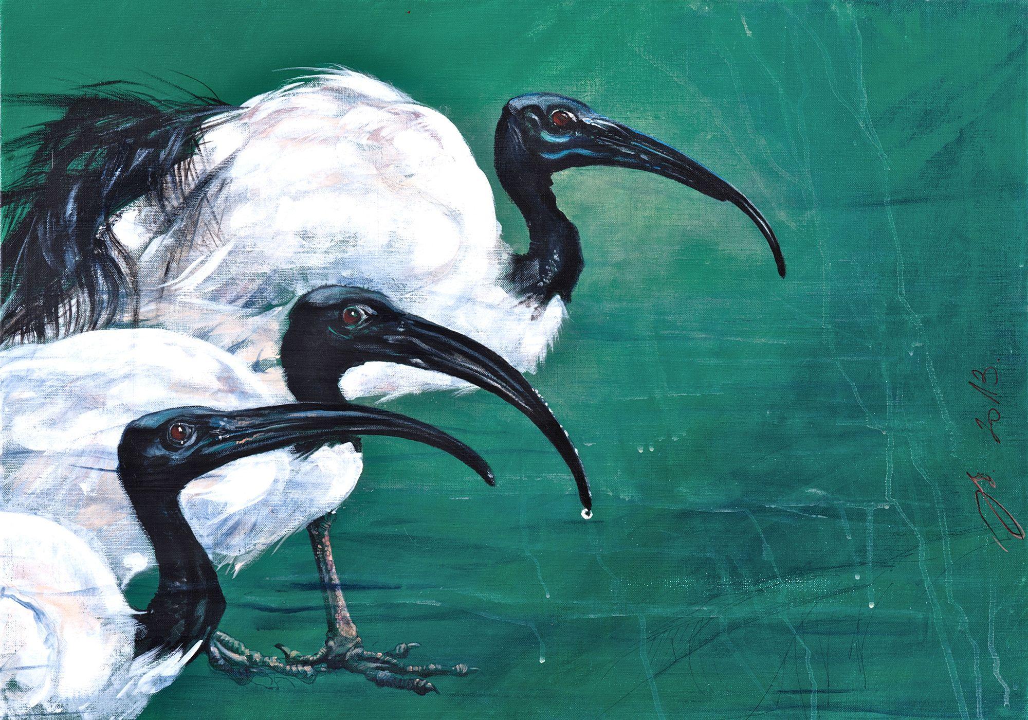 ibis sacrés 1- acrylique sur toile 50 70 cm.jpg