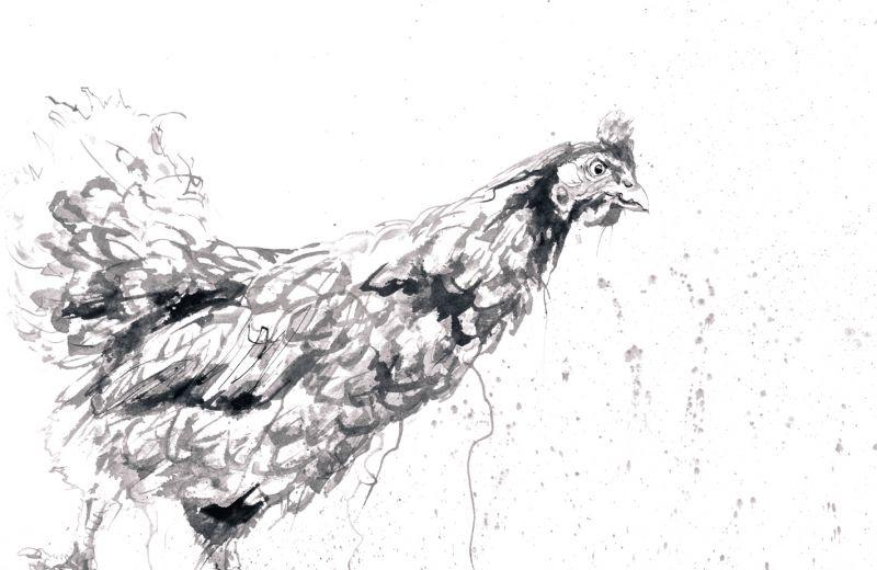 La poule - encre sur papier (56-56 cm).jpg