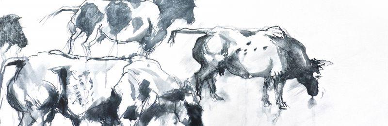 1vaches blanc bleu belges - encre et gesso sur bois 70-140 cm.jpg