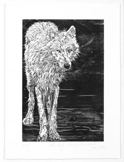 loup arctique copie.jpg