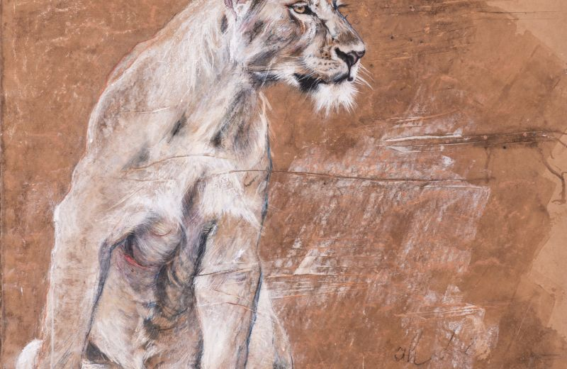 lionne blessée - encaustique et craie sur papier marouflé et clouté sur bois -85 85 cm.jpg