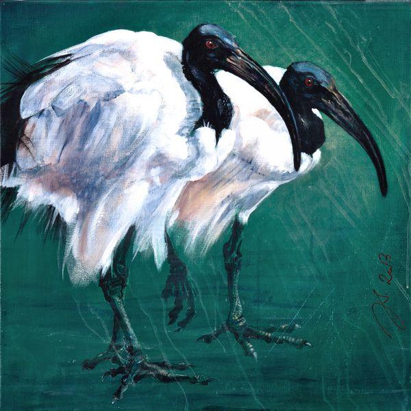 Ibis sacrés (III) - acrylique sur toile - 50/50 cm