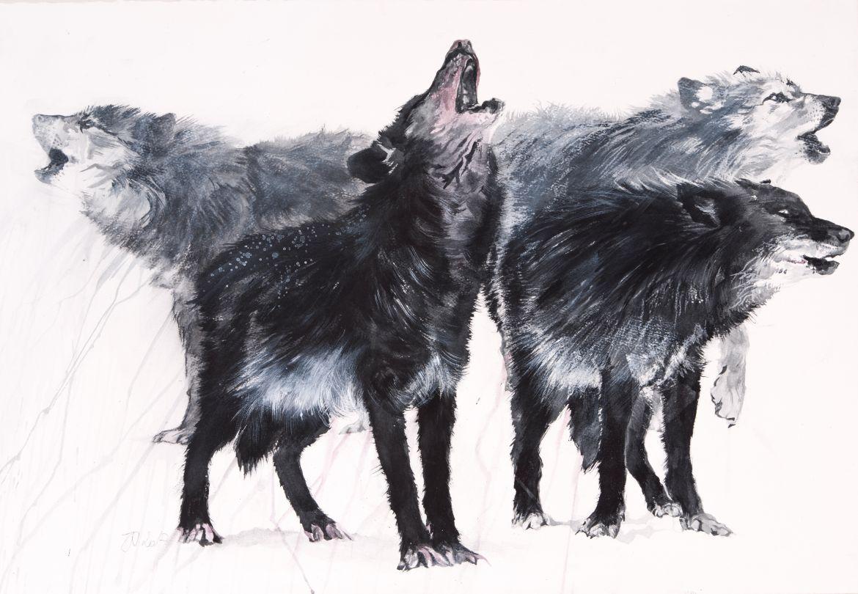 (Timberwolves) Encre sur papier, marouflé trois couches – 110/65 cm