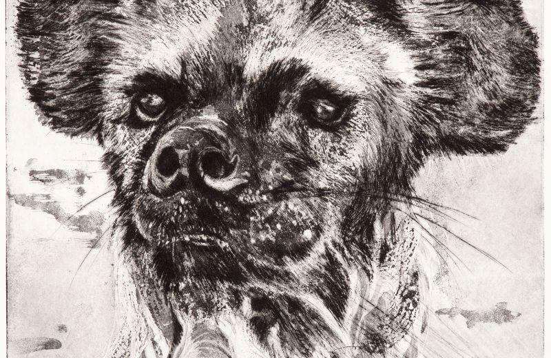 hyène au bain- aquatinte sur cuivre.jpg
