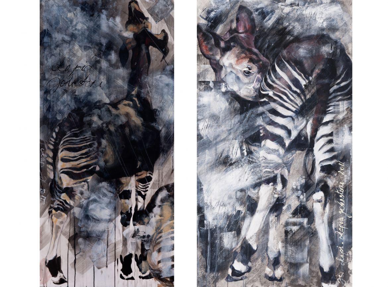Jeune okapi mâle en forêt - encre sur papier -10/60 cm       l       Okapi en sous bois - encre sur papier - 120/60 cm